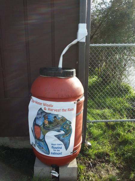 Photo of an installed rain barrel at Union Street Charter School in Arcata, CA.